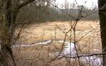 Rybník Křtí je ukryt pod nánosy bahna